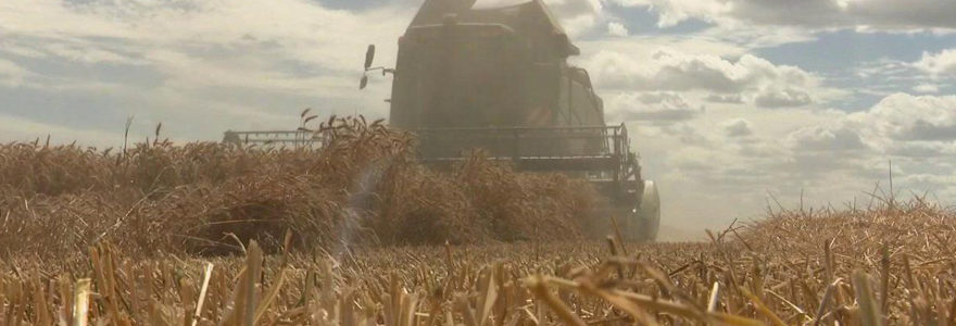 cours des céréales